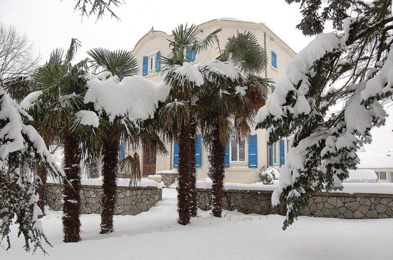 les palmiers sous un manteau blanc,