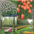 Ballade au pays de la tulipe.....