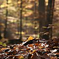 Marcher en forêt