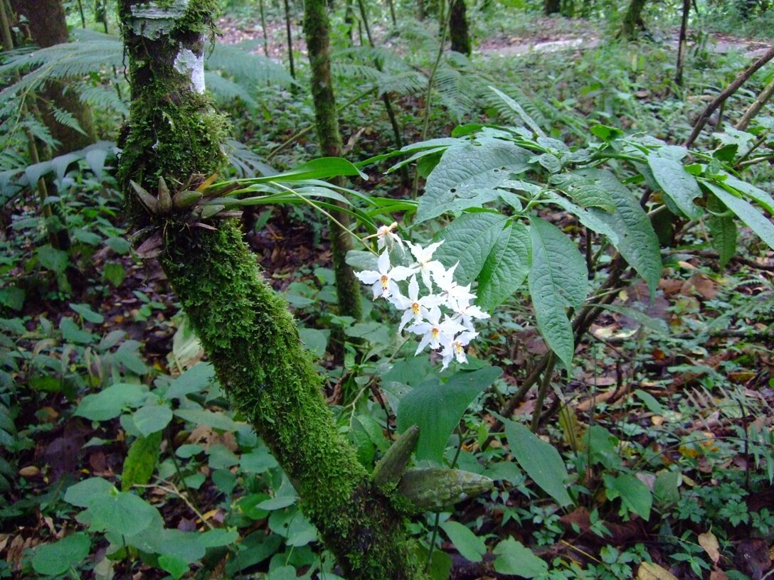 orchidee foret