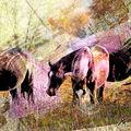 03A. Deux chevaux