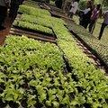 7 - La serre des plants