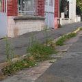 Plan d'urgence à alfortville: y'a pas d'urgence