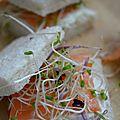 Mini sandwich au saumon fumé, sa crème ail et fines herbes et ses graines germées