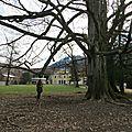 Les arbres du parc simon berger, faverges 74210