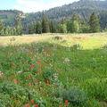 Vallee en fleurs -pres de Bear Lake
