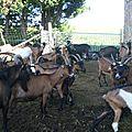 chèvrerie 250911 BR13