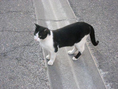 chat NB milieu rue vue dessus