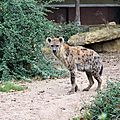 Amneville zoo 6