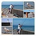 Le pêcheur, le petit poisson et le goéland à Saint-Valéry-en-Caux