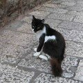 chat Dubrovnic 4