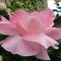 fleur 22