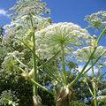 Des plante