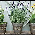 Pots <b>Terre</b> Cuire <b>Emaillée</b> - Graine de Champion - Marie Jeanne - Mauvaise Herbe - Pied de Poule
