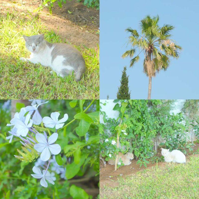 Eté 2008 ... en promenade dans un parc d'Hammamet