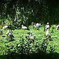 Le parc des cigognes 2