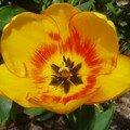 Fleur 5 (République Dominicaine, avril 2007)