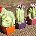 Cactus, fleurs et couleurs