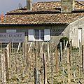 Visite au Château <b>Guadet</b> - Grand Cru Classé de Saint Emilion - Partie 2 : vignoble, cuvier, et chai
