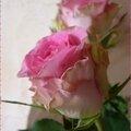 Bouquet roses 15