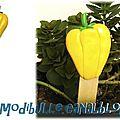 pic jardin poivron