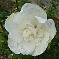 Jupons blancs d'automne