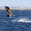 Windsurfeurs sur l'étang de thau à marseillan le 8 novembre après-midi