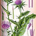 Herbier, les plantes qui soignent - Le Chardon <b>Marie</b>