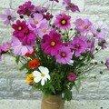 Fleurs de jachere