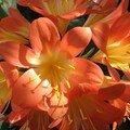 445 - 05/03 - Palmengarten - Mes fleurettes
