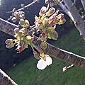 Les couleurs du printemps en photo...