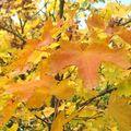 Haiku de l'automne (29)