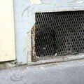 grillesblogIMG_7459_web