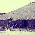 Mali et Sénégal - Formation agricole et rurale (6/19). Une formation de <b>masse</b> pour les producteurs et productrices !