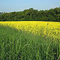L'agriculture <b>Biologique</b>