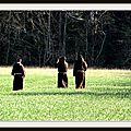 Les moines et le blé en herbe.