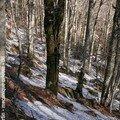 Hiver et neige - forêt en Cevennes