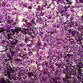 Libelul voit violet