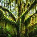 arbres7