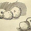 Pommes de Chardin au feutre noir