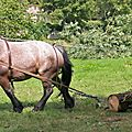 IMG_7510 a
