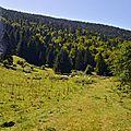 Le plateau du Cournau