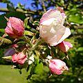 Du blanc et du rose