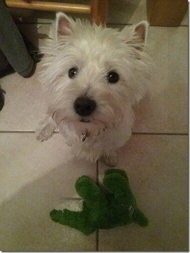 Petit billet dédié à mon petit chien