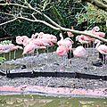Amneville zoo 15