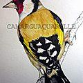 <b>Chardonneret</b>/ goldfinch