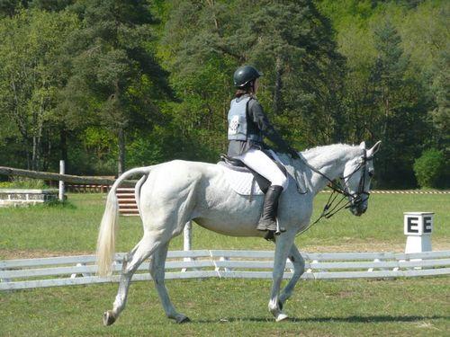 Fontainebleau-équitation