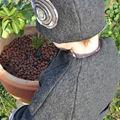 Chocalat-café