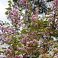 1-Fleurs de Léon 100417
