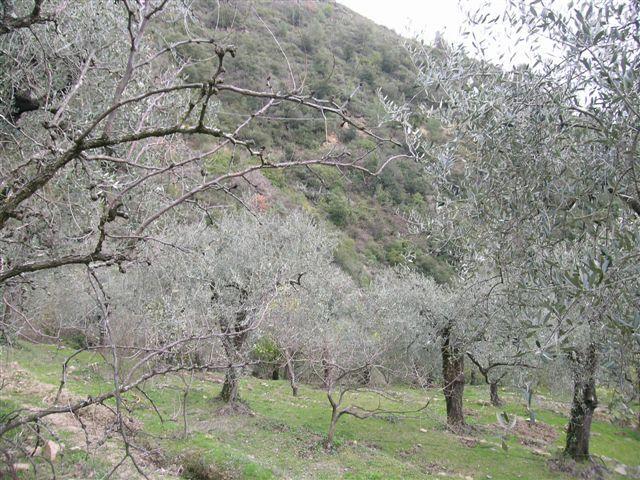 Dolceacqua Rosa 051